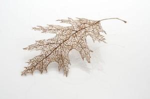 Jenine Sherios, Leaf (auburn), 2011. Foto door Robert Diamante